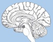 Study Demonstrates That Racial Bias Is Reflected in Neural Activity