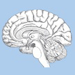 Research Finds Links Between Poverty and Slower Brain Development
